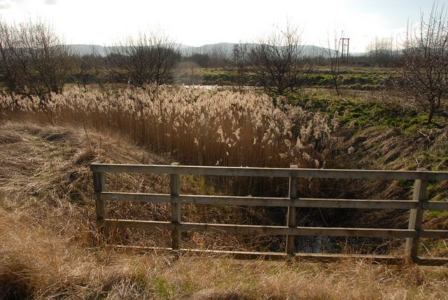 Reed filled ditch