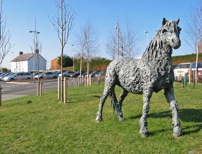 SH8077 : Welsh Mountain Pony by Jonathan Wilkins