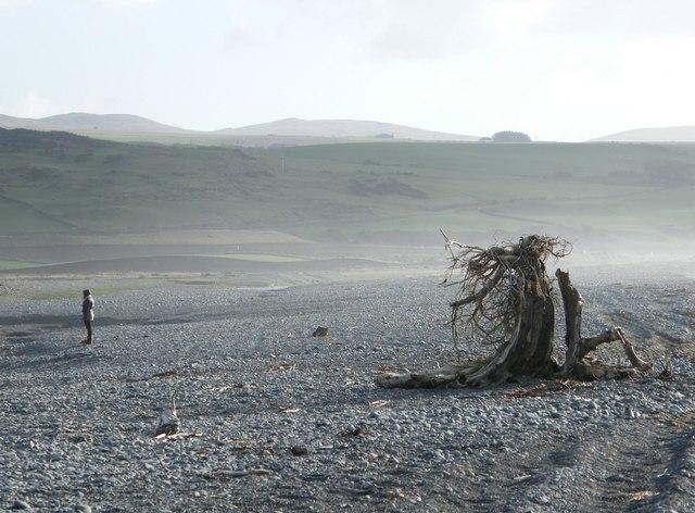 Strange Treetrunk Ballantrae Beach