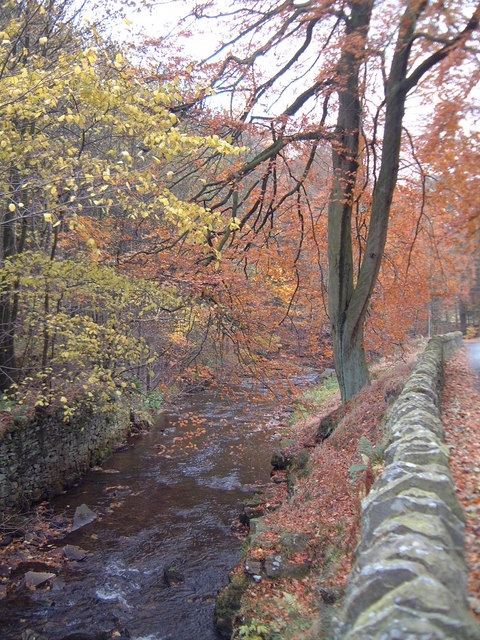 Clough Brook in autumn