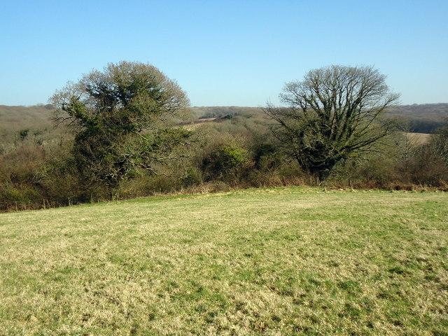 Trees near Penpedwast