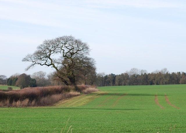 Farmland near Spurley Brook