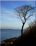 J4583 : Tree, Grey Point by Rossographer