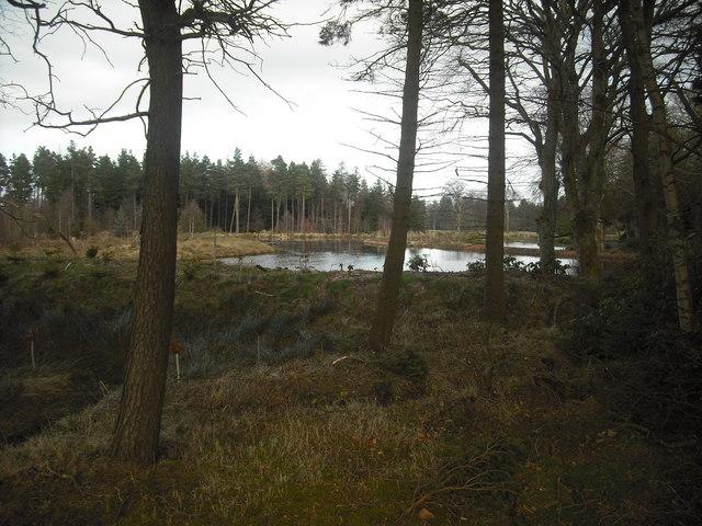 Pond: Dovecot Wood
