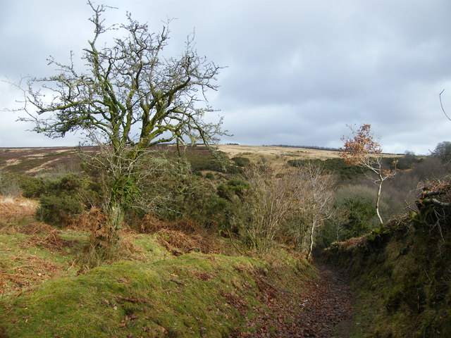 Footpath into Anstey's Gully