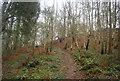 SO4480 : Shropshire Way, Stoke Wood by N Chadwick