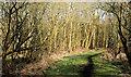 J1384 : Rea's Wood, Antrim (12) by Albert Bridge