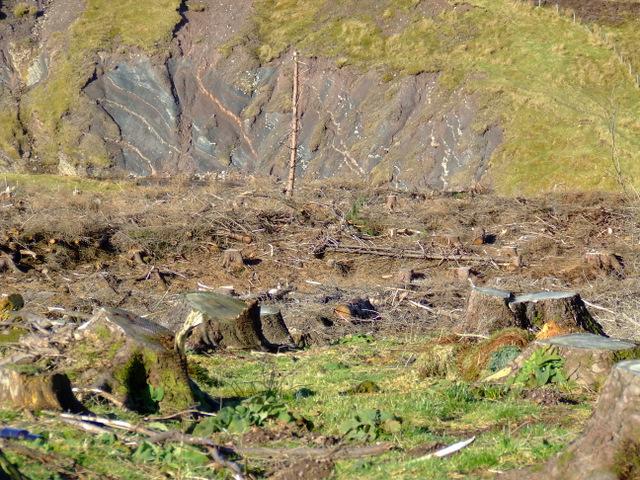 Deforestation at Loch Thom