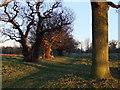 TQ1974 : Ancient oaks west of Holly Lodge, Richmond Park by Stefan Czapski