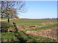 TM3868 : Footpath to the A12 Main Road & Old High Road by Geographer
