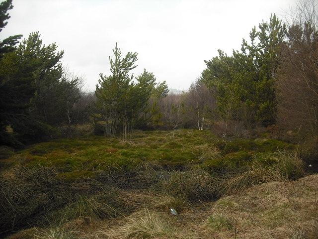 Marshy woodland