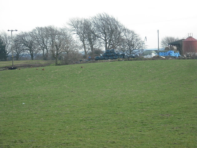 Pasture: Blackburn Mains