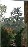 ST5071 : Old cedar next to Tyntesfield Chapel by Stuart Logan