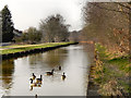 SJ7699 : The Bridgewater Canal, Monton by David Dixon