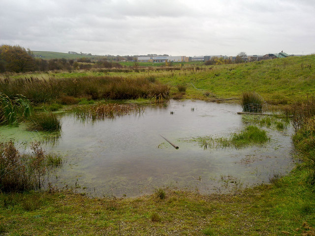 Marsh and bog in Milnrow