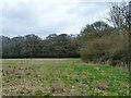 TQ2618 : Furze Field by Robin Webster