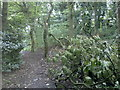 SD9409 : Damaged tree in Crompton Hall woods by Steven Haslington