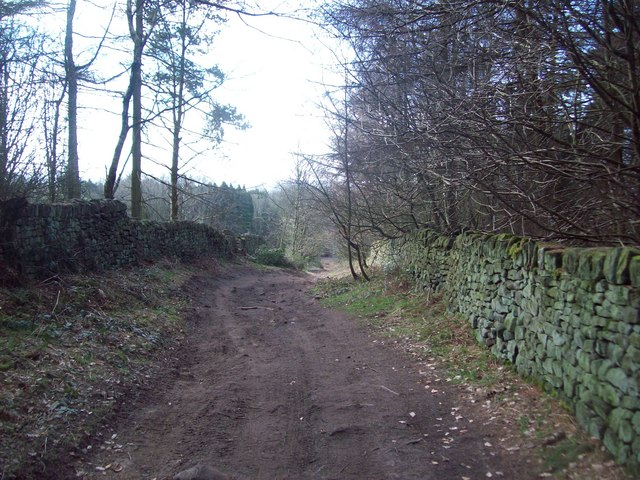 Back Lane near Wayne Corner Plantation