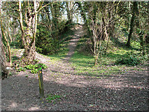 TG2105 : Footpath marker in Danby Wood nature reserve by Evelyn Simak