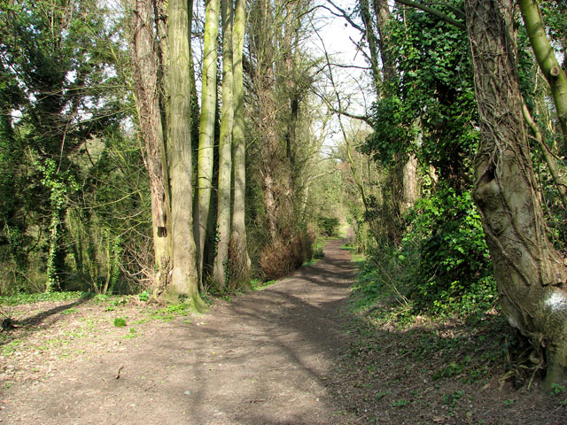 Path through Danby Wood nature reserve