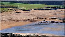 J4682 : The shore at Crawfordsburn (6) by Albert Bridge