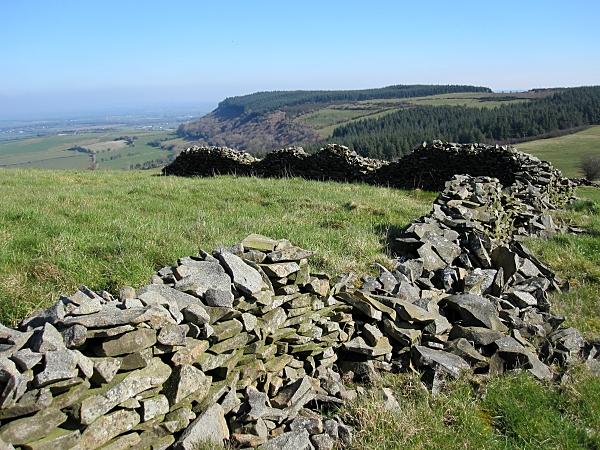 Dry Stone Fence