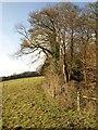 TQ2252 : Edge of Watson's Wood by Derek Harper