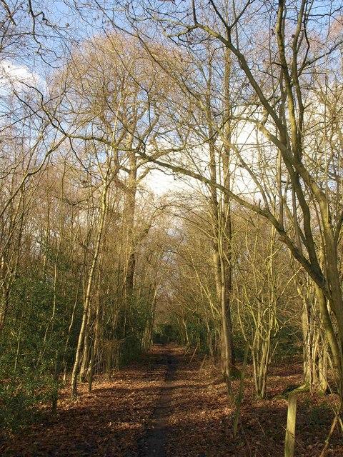 Bridleway, Queen's Wood