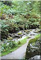 NY2328 : Beck in Dodd Wood by Anthony Parkes