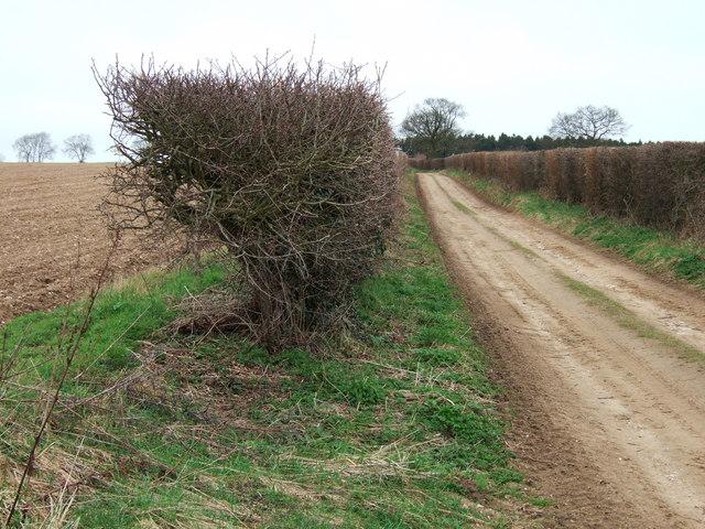 Croughton Lane west of Tattersett in Norfolk