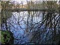 TG2105 : Reflections in a pond on Harford marshes by Adrian S Pye