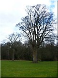 NT3366 : Trees in the grounds of Newbattle Abbey by kim traynor