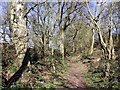 SJ7500 : Bridleway to Beckbury, Shropshire by Roger  Kidd