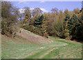SJ7500 : Track by woodland near Badger, Shropshire by Roger  Kidd