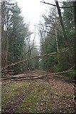 TQ5991 : Barrack Wood by Glyn Baker