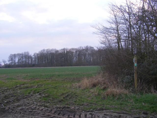 Footpath to Dodd's Wood via Crane's Wood