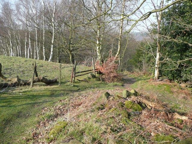 Path junction, Dawson Wood, Idle