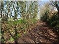 ST0104 : Cranishaies Lane by Derek Harper