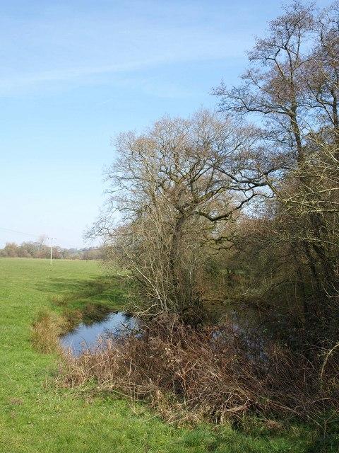 Pond by the Culm