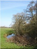 ST0104 : Pond by the Culm by Derek Harper