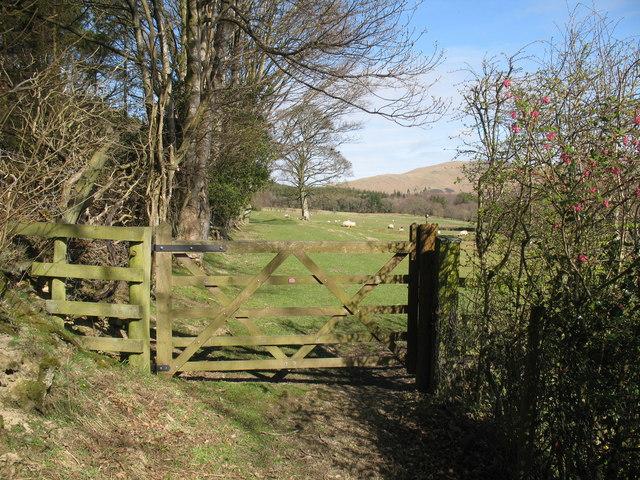 Bridleway near Robin Hood Wood, Bassenthwaite