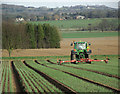 SJ7600 : Spring Onions growing near Badger, Shropshire by Roger  Kidd