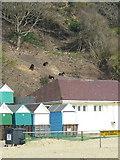 SZ1191 : Goats at Boscombe by Maigheach-gheal