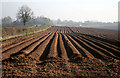 SO7649 : A deeply furrowed field by David Lally