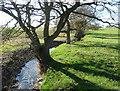SJ7977 : Pedley Brook near Pedley House Farm by Anthony O'Neil