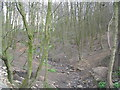 SE2130 : Woodland Stream - New Lane by Betty Longbottom