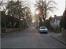 SJ7886 : Grange Avenue, Hale, Cheshire by Anthony O'Neil