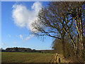 SU7899 : Farmland, Bledlow by Andrew Smith