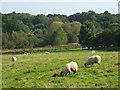 SU7990 : Pasture, Frieth by Andrew Smith