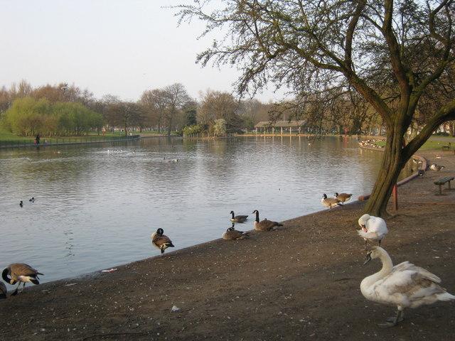 Small Heath Park lake © Michael Westley :: Geograph ...